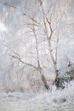 Árvores com geada do inverno Fotos de Stock Royalty Free