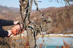 Árvores da estaca do trabalhador Imagens de Stock Royalty Free