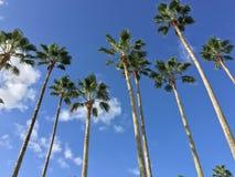 Árvores de coco na baía de Lagoi, Bintan, Indonésia Fotos de Stock