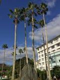 Árvores de coco na baía de Lagoi, Bintan, Indonésia Imagens de Stock Royalty Free
