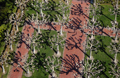 Opinião de árvore B1a de Berkeley Fotografia de Stock