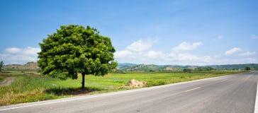 Árvores dentro da estrada secundária Foto de Stock