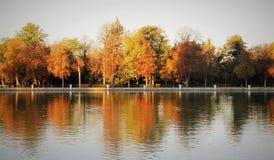 ?rvores do outono em um parque foto de stock
