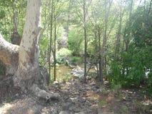 ?rvores do rio imagens de stock
