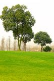 Árvores e gramado Fotografia de Stock