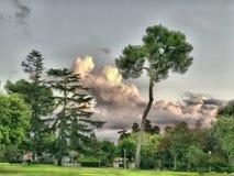 Árvores e nuvens Fotografia de Stock