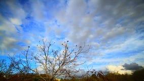 Árvores e nuvens filme