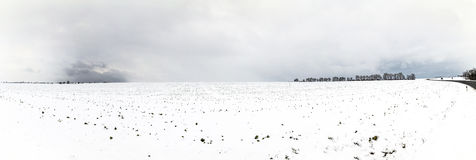 Árvores geladas brancas na paisagem coberto de neve Fotografia de Stock Royalty Free