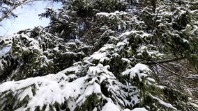 Árvores na neve no inverno vídeos de arquivo