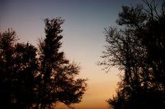 Árvores na noite Fotografia de Stock