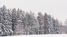 ?rvores nevado nas madeiras Inverno na floresta filme