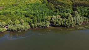 ?rvores novas, planta??es nas inclina??es Vista a?rea na garganta de Dniester, rio, ba?a de Bakota no parque nacional Podilski To video estoque