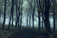 Árvores pretas na floresta assustador Foto de Stock