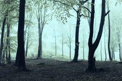 Árvores pretas na floresta assustador Fotografia de Stock Royalty Free
