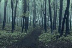 Árvores pretas na floresta assustador Fotos de Stock Royalty Free