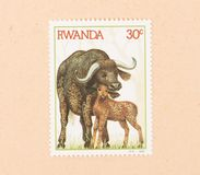 A stamp printed in Rwanda shows a waterbuffalo with a young, circa 1984. RWANDA - CIRCA 1984: A stamp printed in Rwanda shows a waterbuffalo with a young, circa stock image