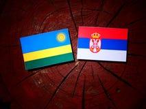 Rwanda flag with Serbian flag on a tree stump isolated. Rwanda flag with Serbian flag on a tree stump royalty free stock image