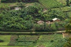 Rwanda. Landscape of Rwanda with crops and plantations Royalty Free Stock Photos