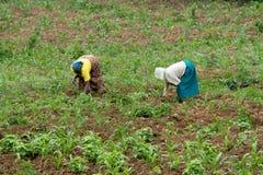 Rwanda Stock Images