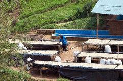Rwandan coffee washing and dry station Stock Images