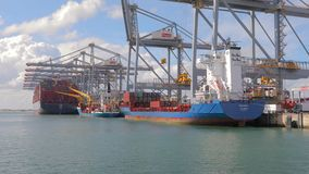 RWG container terminal in Rotterdam stock video footage