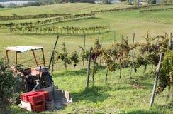 Rwos dell'uva e del trattore Fotografia Stock Libera da Diritti