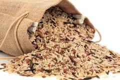 ryż dzicy Zdjęcie Royalty Free