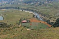 ryż odpowiadają przy SAPA Wietnam Zdjęcie Stock