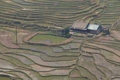 ryż odpowiadają przy SAPA Wietnam obrazy royalty free