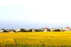 ryż pola dziewięć i domy Obrazy Royalty Free