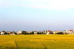 ryż pola dziewięć i domy Obraz Stock