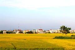 ryż pola dziewięć i domy Fotografia Stock