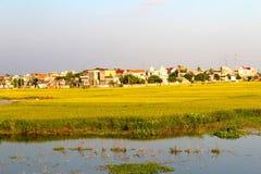 ryż pola dziewięć i domy Zdjęcia Stock