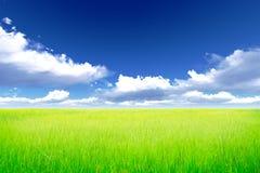 Ryżowa łąka Zdjęcia Royalty Free