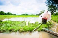 Ryżowa łąka Fotografia Stock
