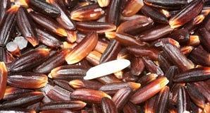 Ryżowa i ryżowa jagoda Fotografia Stock