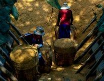 Ryżowa plewa zdjęcia stock