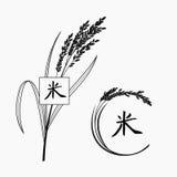 Ryżowa roślina z ręka pisać chińskim charakterem Zdjęcia Stock
