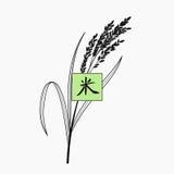 Ryżowa roślina z ręka pisać chińskim charakterem Zdjęcie Royalty Free