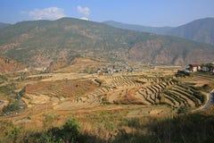 Ryżowego irlandczyka krajobraz z wioską, Bhutan Obraz Royalty Free