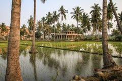 Ryżowi irlandczycy gajem kokosową świątynią i, Hampi, Karnataka, India fotografia royalty free