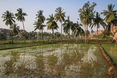 Ryżowi irlandczycy, Hampi, Karnataka, India zdjęcia royalty free