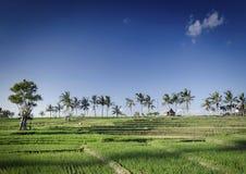 Ryżowi paddie pola kształtują teren widok w południowym Bali Indonesia fotografia royalty free