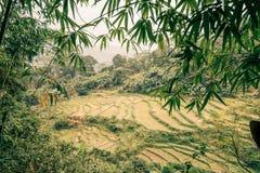 Ryżowi paddys w dżungli Vietnam obrazy royalty free