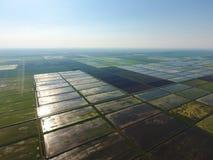Ryżowi pola zalewają z wodą Krajobraz przed słońcem Zalewający ryżowi irlandczycy Agronomic metody rosnąć ryż wewnątrz obraz royalty free