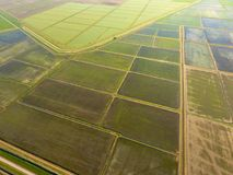 Ryżowi pola zalewają z wodą Zalewający ryżowi irlandczycy Agronomic metody rosnąć ryż w polach obrazy royalty free