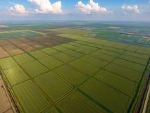 Ryżowi pola zalewają z wodą Zalewający ryżowi irlandczycy Agronomic metody rosnąć ryż w polach zdjęcia royalty free