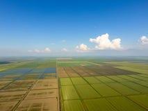 Ryżowi pola zalewają z wodą Zalewający ryżowi irlandczycy Agronomic metody rosnąć ryż w polach obraz stock