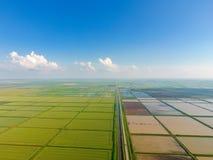 Ryżowi pola zalewają z wodą Zalewający ryżowi irlandczycy Agronomic metody rosnąć ryż w polach zdjęcie stock