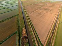 Ryżowi pola zalewają z wodą Zalewający ryżowi irlandczycy Agronomic metody rosnąć ryż w polach zdjęcia stock